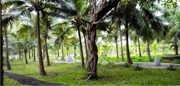 Aashyana Grounds